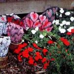 горшечные каменные цветы