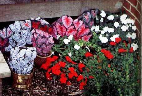 Рисунки на камнях цветы