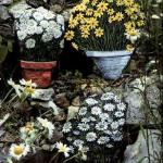 горшечные цветы на склоне