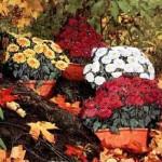рисунки цветов на камнях